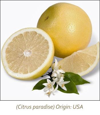 White Grapefruit Essential Oil